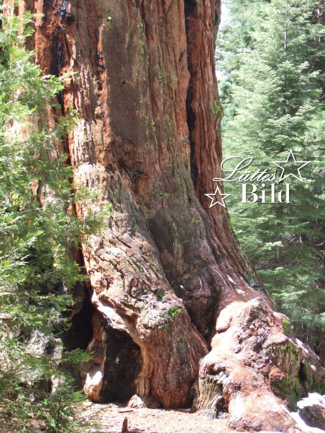 sequoia_660x880