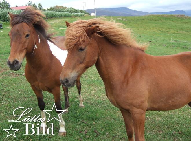 Pferde_660x487