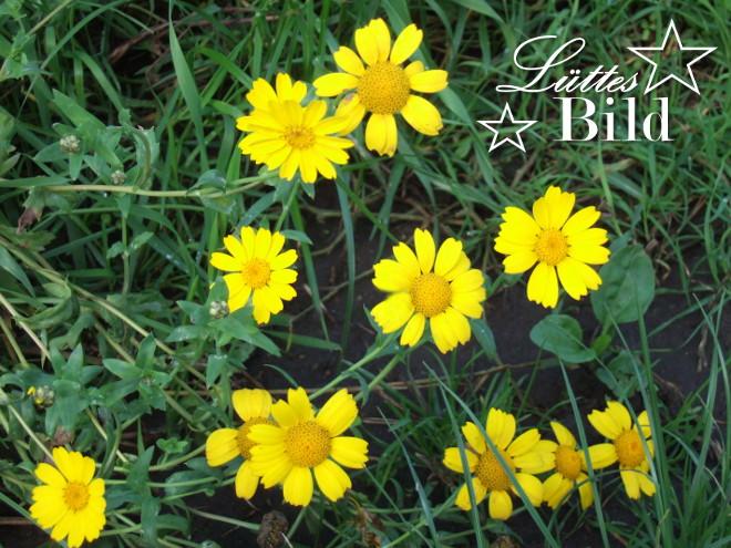 gelbe.blumen_660x495