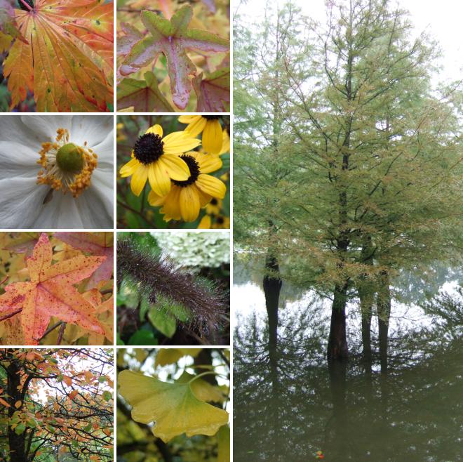 Herbst.i.Arboretum.2_660x660