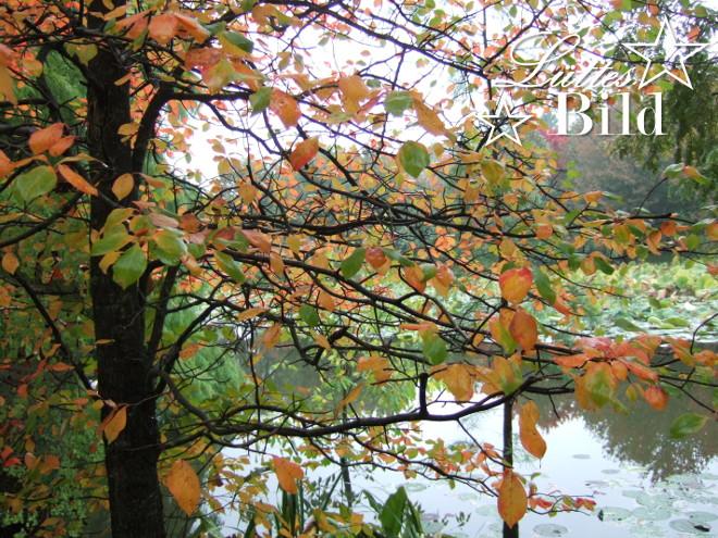 See.im.Arboretum_660x495