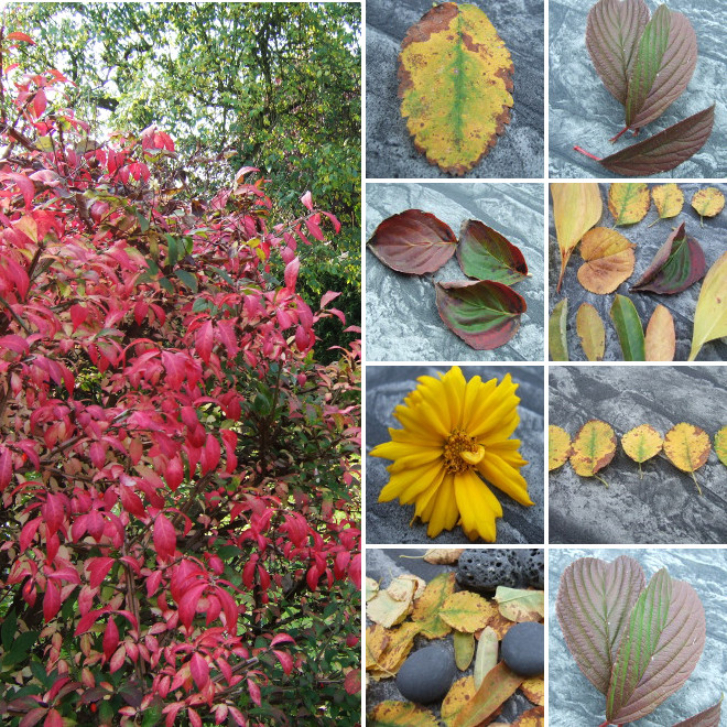 aaa.Herbstcollage_660x660