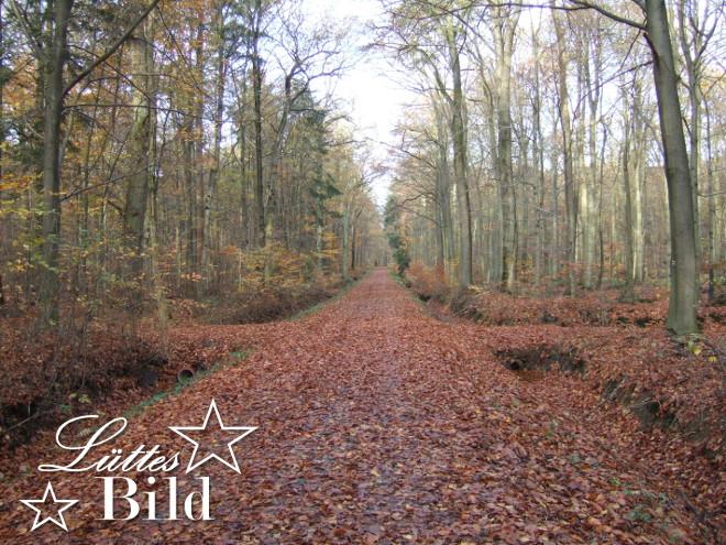 Waldweg_660x495