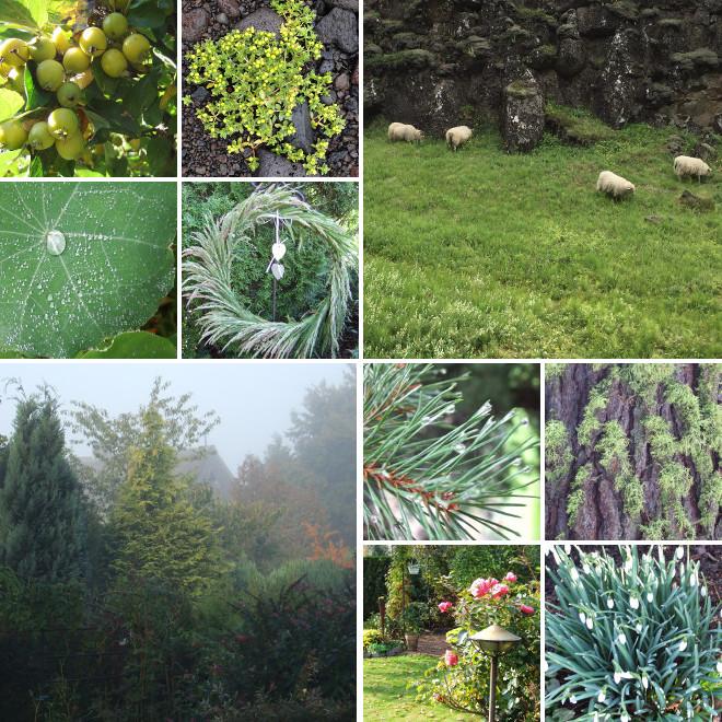 gruene.collage.Pflanzen_660x660