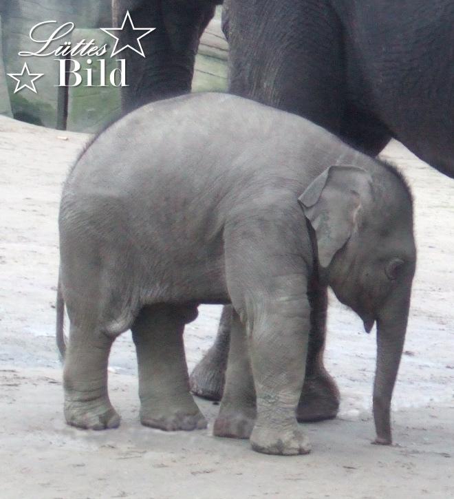 Elefantenbaby_660x725