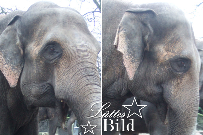 Elefantenkoepfe_660x440