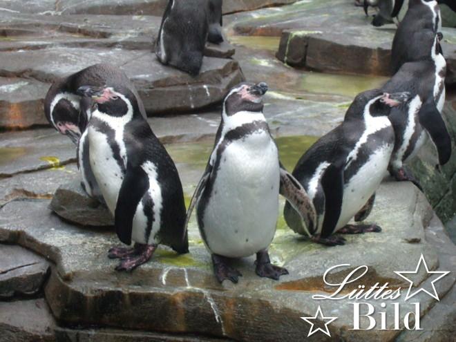 Pinguine_660x496