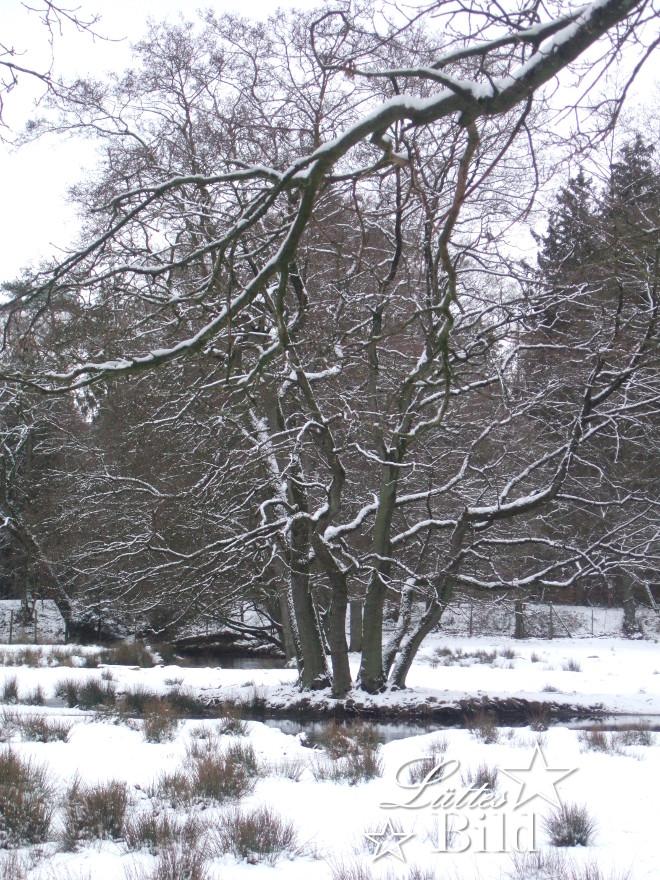 winterszene_660x880