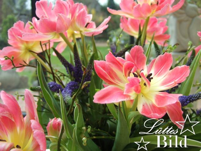 Blumen.5_660x495