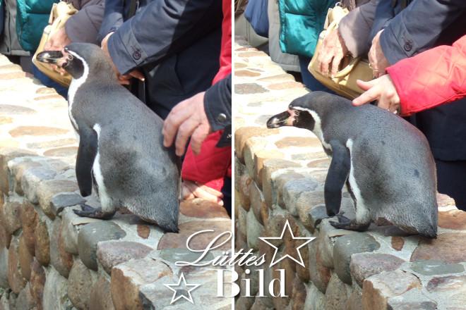 Pinguine.2_660x440