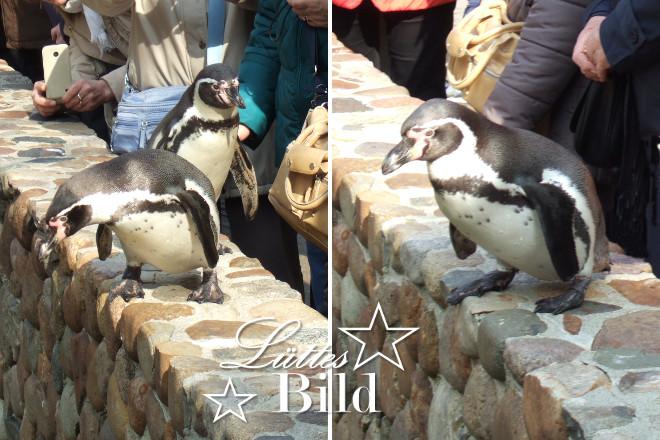Pinguine_660x440