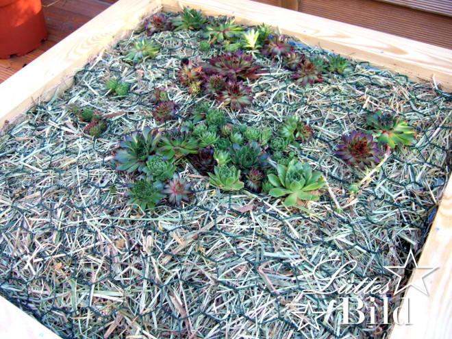 Kiste erste Pflanzen_660x495