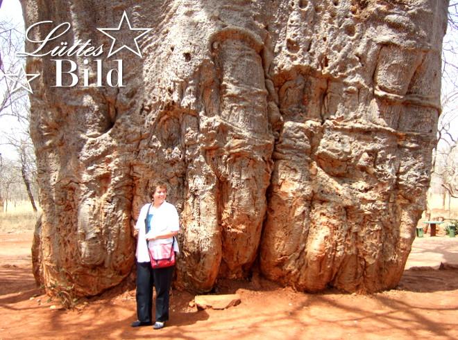 baobab-im-vergleich_660x491