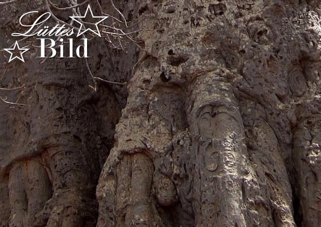 baobab-detail_660x467