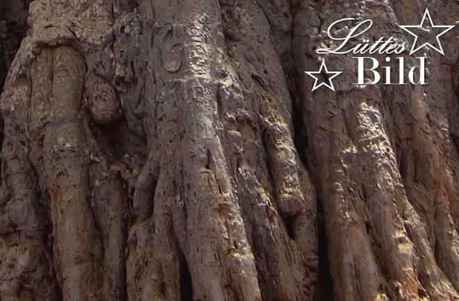 baobabrinde_660x433