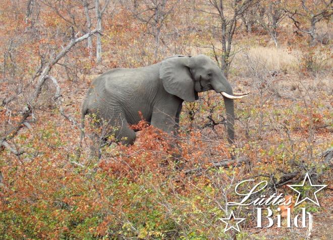 elefant-im-busch_660x476