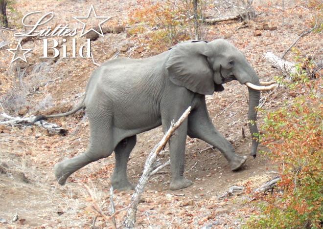 elefant-laeuft_660x469