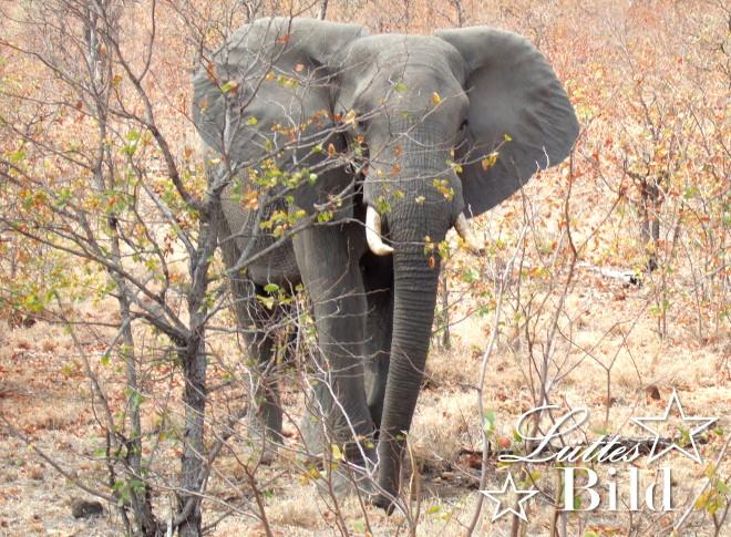 elefant-von-vorne_660x485