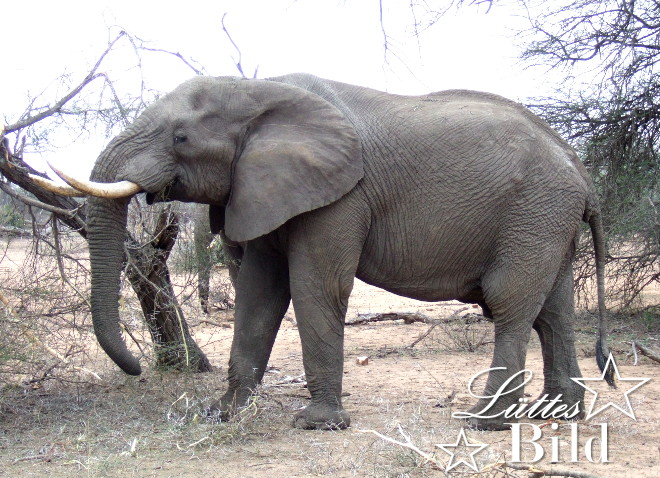 elefant-ganz_660x478