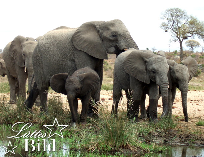 elefantenfamilie-2_660x510