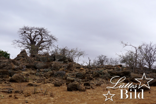 uebersicht-baobab_660x441