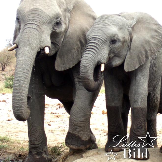 zwei-elefanten_660x659