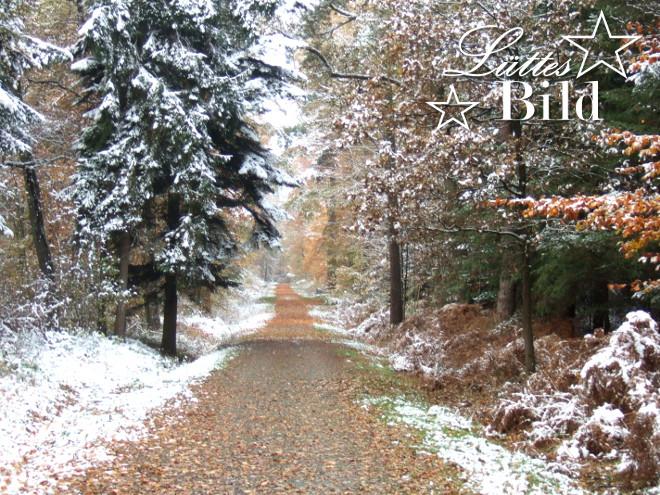 herbst-winterwald_660x495