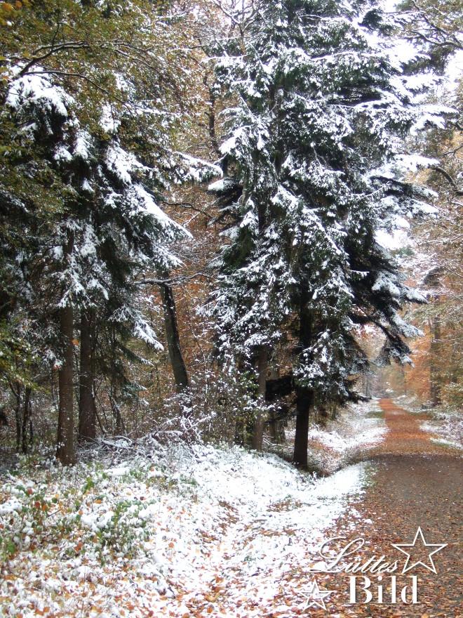 wintertannen_660x880
