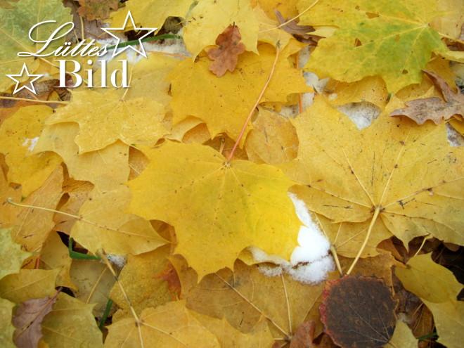 gelbe-blaetter_660x495
